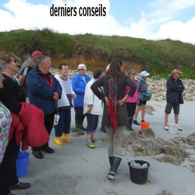 29 Mai 2017 - Cueillette des Algues à Corn ar Gazel (2)