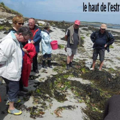 29 Mai 2017 - Cueillette des Algues à Corn ar Gazel (3)