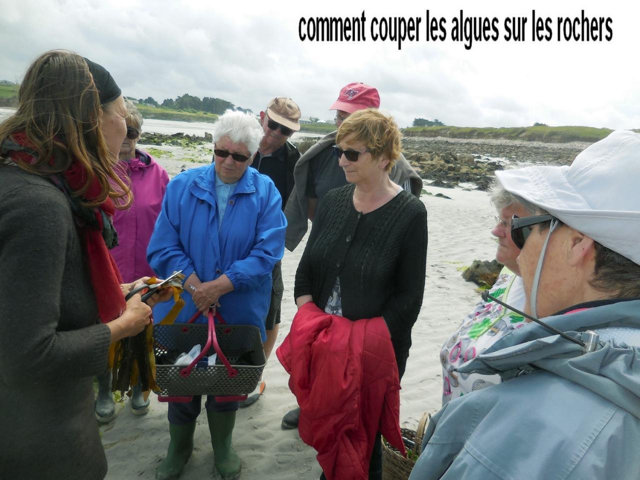 29 Mai 2017 - Cueillette des Algues à Corn ar Gazel (5)