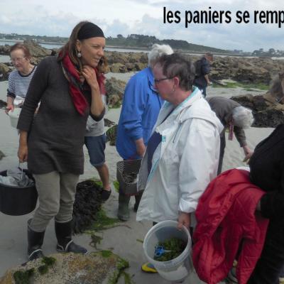 29 Mai 2017 - Cueillette des Algues à Corn ar Gazel (7)