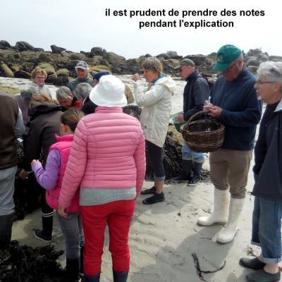 16 Mai 2018 - Cueillette des Algues à Brignogan