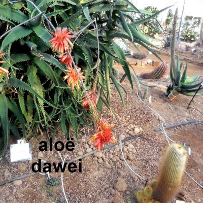 La cactuseraie de Creismas en Guipavas